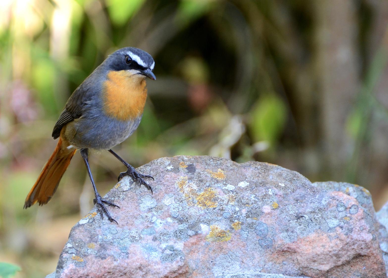 heronbridge-birds4
