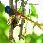 heronbridge-birds2